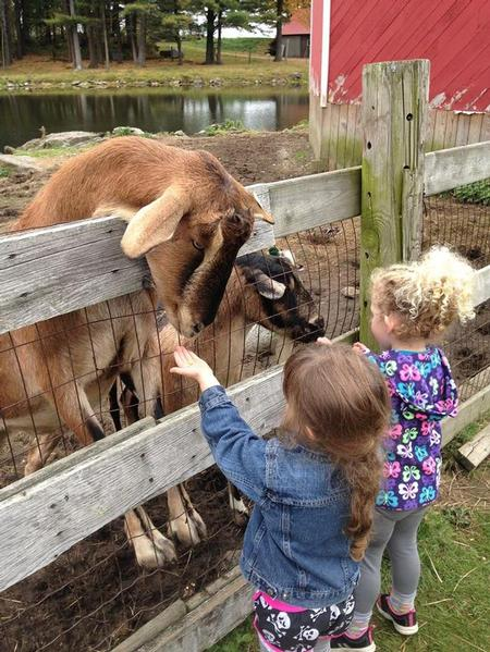 - Petting the Goats